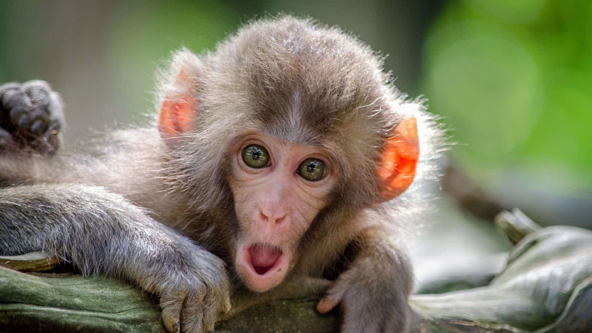 A monkey gasping with shock at the wonders of digital marketing.